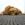 Pesticide Treatment Gloucester Cheltenham Tewkesbury Flea